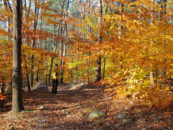 Boston Area Campgrounds: Wompatuck State Park