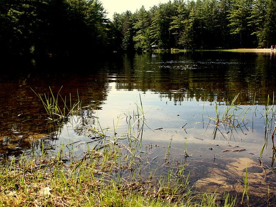 Boston Area Campgrounds: Otter River State Forest